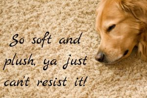 carpet is soft and plush