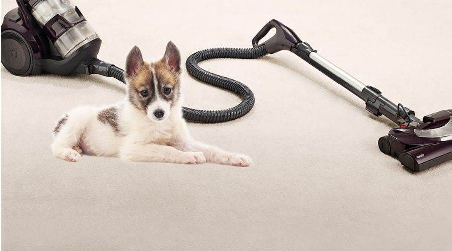 Best BAGLESS Canister Pet Hair Vacuum