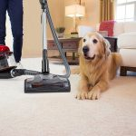 Top Rated Ultra Plush Carpet Vacuums