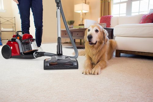 Top Rated Ultra Plush Carpet Vacuums