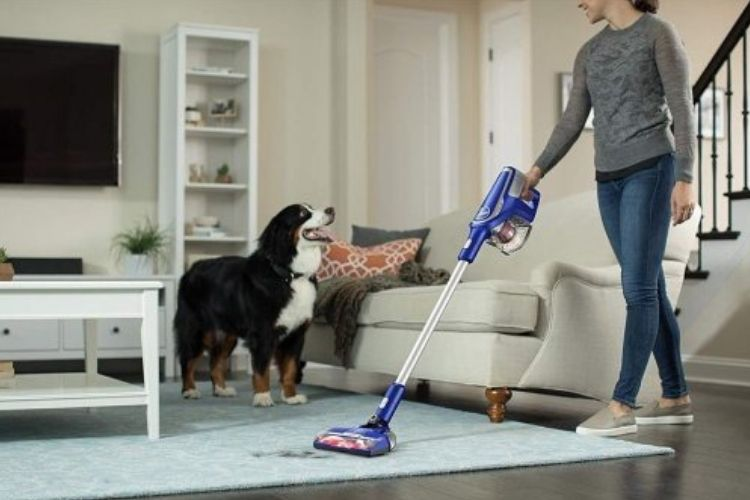 Best Cordless Vacuums for Pet Hair